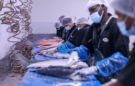 Bidfood UAE joins forces with wholesale seafood supplier, wet fish, via majority acquisition