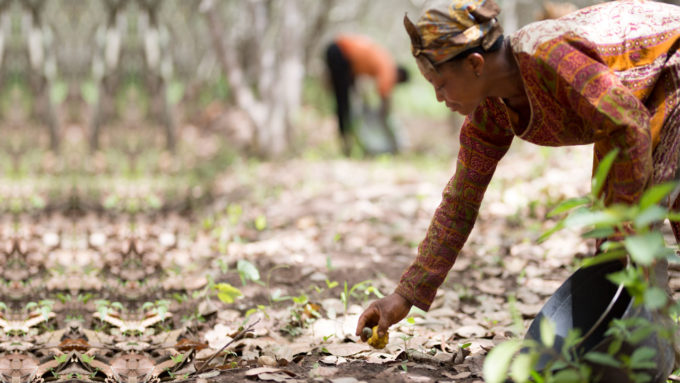 Olam Food Ingredients announces targets to tackle poverty and scale up sustainability in global cashew supply chains